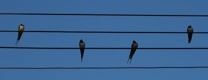 Vogels die op draden worden neergestreken Royalty-vrije Stock Foto