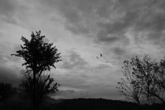 Vogels die op een bewolkte dag in zwart-wit vliegen Stock Afbeeldingen