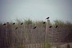 Vogels die op een omheiningspost bij het strand zitten Stock Afbeelding