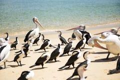 Vogels die op het strand rusten Royalty-vrije Stock Foto's