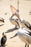 Vogels die op het strand rusten Royalty-vrije Stock Afbeelding