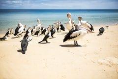 Vogels die op het strand rusten Royalty-vrije Stock Foto