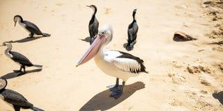 Vogels die op het strand rusten Royalty-vrije Stock Fotografie