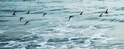 Vogels die op overzeese achtergrond vliegen Stock Afbeelding