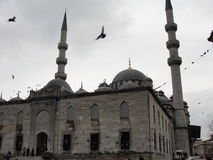 Vogels die over de Blauwe Moskee in Istanboel, Turkije vliegen Stock Foto's