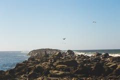 Vogels die over de rotsachtige kustlijn vliegen stock foto