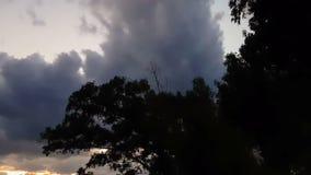 Vogels die over een boom tegen een dramatische hemel vliegen Een eng landschap stock videobeelden