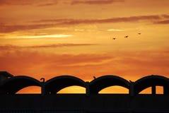 Vogels die over het dak vliegen. Royalty-vrije Stock Afbeeldingen