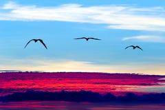 Vogels die silhouetten vliegen stock foto's