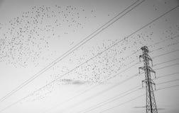 Vogels die van hoogspanningdraden beginnen stock foto