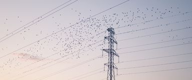 Vogels die van hoogspanningdraden beginnen stock fotografie
