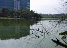 Vogels die voedsel zoeken in water van meer royalty-vrije stock foto