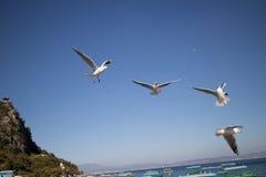 Vogels die voor voedsel wedijveren Stock Afbeelding