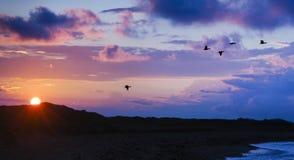 Vogels die voorbij bergen migreren terwijl de zon plaatst royalty-vrije stock foto