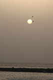 Vogels die voorbij zon bij zonsondergang vliegen Royalty-vrije Stock Fotografie