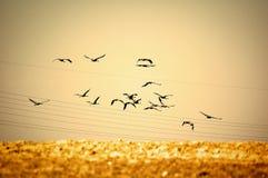 Vogels die wegvliegen Royalty-vrije Stock Afbeeldingen