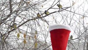 Vogels die zaden in de winter pikken De trog in de Santa Claus-hoed stock videobeelden