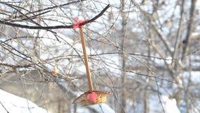 Vogels die zaden van de kringloopdiebak pikken aan het hart wordt gelijmd, dat op de tak in de tuin hangt Selectieve nadruk stock footage