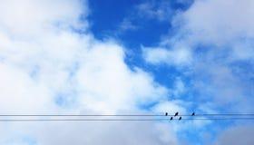 Vogels die zich op draden bevinden Royalty-vrije Stock Afbeeldingen