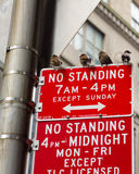 Vogels die zich op geen bevindende tekens in de Stad van New York bevinden Stock Foto's