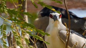 Vogels in dierentuin Stock Foto's