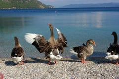 Vogels door kant van oceaan Stock Foto's