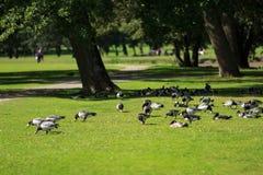 Vogels in Drottningholm Royalty-vrije Stock Afbeeldingen
