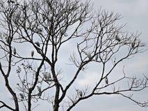 Vogels in een boom en een lichtblauwe hemel royalty-vrije stock afbeelding