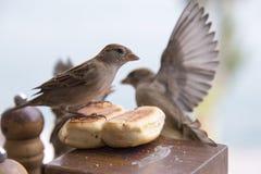 Vogels en brood Royalty-vrije Stock Afbeeldingen