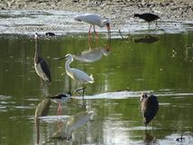 vogels en cipresbomen Royalty-vrije Stock Foto's