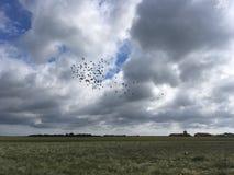 Vogels en gebied Stock Foto's