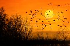 Vogels en zon Royalty-vrije Stock Foto's