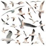 Vogels geplaatst geïsoleerd Stock Foto's