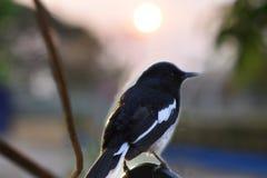 Vogels gevangen stompen in het Westen royalty-vrije stock foto