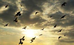 Vogels in hemel stock afbeelding