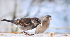 Vogels het Eten Stock Fotografie