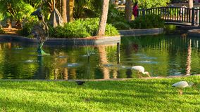 Vogels in het het meer en park van Eola stock videobeelden