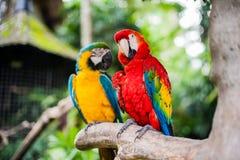 Vogels in het museum Blanco, Bali Stock Foto