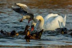 Vogels het vechten stock afbeeldingen