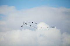 Vogels het vliegen Royalty-vrije Stock Foto's