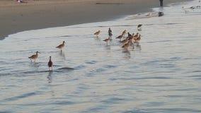 Vogels in het water Stock Afbeeldingen