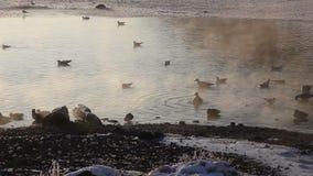 vogels het zwemmen stock footage