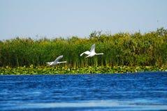 Vogels hierboven - water met installaties stock fotografie