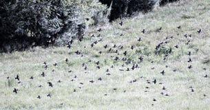 Vogels in ingediende 1 Stock Afbeeldingen
