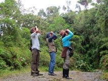 Vogels kijken w nevelwoud, Birdwatching w obłocznym lesie/; Santa obrazy stock