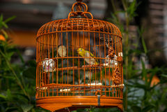 Vogels in kooien die bij de Vogeltuin hangen - 10 Stock Afbeeldingen