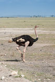 Vogels in Masai Mara Royalty-vrije Stock Afbeeldingen