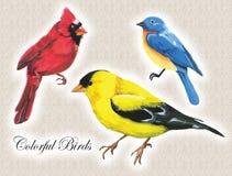 Vogels met plakkaatverf worden getrokken die vector illustratie