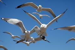 Vogels in motie Royalty-vrije Stock Afbeelding