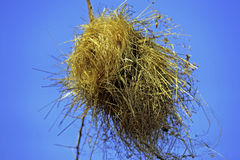 Vogels nest Stock Fotografie